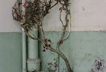 growth vs decay