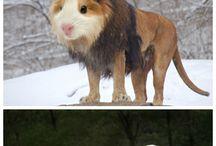 Zvierací humor
