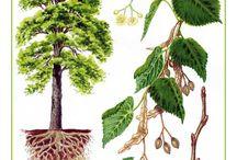 pomůcky stromy