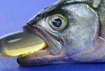 Global Fish Oil Market