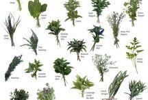 popüler bitkiler