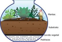plantas i cactus