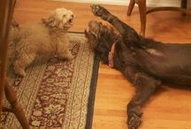 Meech and Meggie, my dogs / Big dog, little dog. Funny stuff!