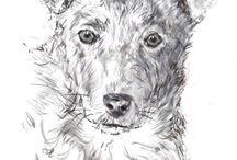 teken hond