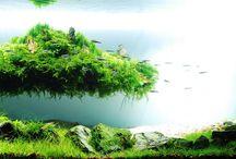 Nature Aquaria