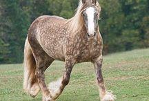 Horses / Horses are cute