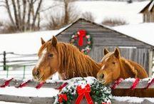 Horses * Pferde