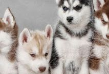 Doggies!!!