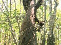 különös fa formák