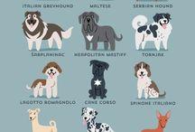 kutyákok