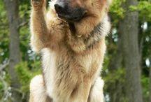 #kutyák