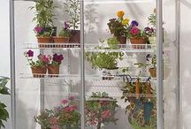 horticulture: urban /indoor /balcony gardening / by Berried Treasures
