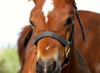 Horse Crazy / by Vista Verde Ranch