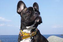 PET / ショップにいる看板犬!?です! みんなと沢山遊んでもらうのが大好き!