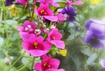 Flower / Images of Flowers,Plants,Fauna