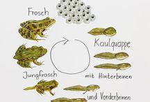 Tagesmutter Angebot Frosch