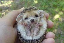 Cute! :3