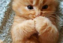 roztomile mačičky