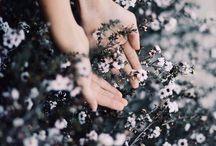 Frumusețe