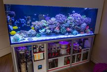 aquarium ideas saltwater
