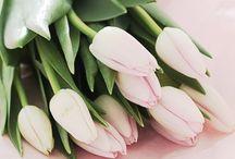 tulips<3