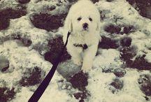 Puppy(kleo)