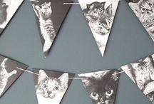 Fiesta gatos