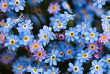 flowers...the real beauties