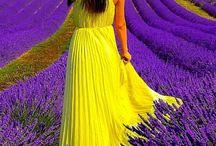 Violet & Yellow