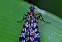 Ötökkä*Bug