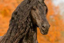 Foto's pony's 2.