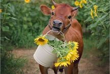 Lehmiä ja muita eläinmaalauksia
