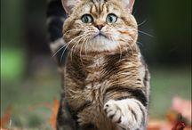 Cats / by Luna Luna