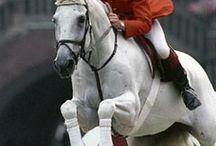 Horsey Heroes / Inspirational Horses & Riders