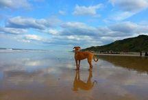 Dog Gallery / Dogs having fun in Norfolk