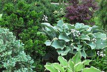 Zahrada / Rastliny do tiena 1