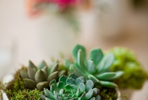 For the Home: Plants