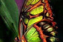 butterflies / by Roxanne Berg