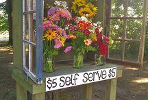 Selling Cut Flowers!