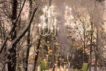 Winterwonder Land in the Woods