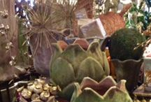 Easy Holiday Decorating - Botanically Inspired / Natural elements featured in Aged Terra Cotta