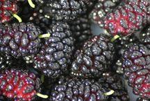 Grønnsaker bær osv