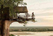 Lola's dream tree houses
