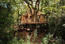 Dieses Erstaunliche Baumhaus-Hotel War Im Urlaub Für Erwachsene Konzipiert.