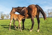 Young Horse Health Care / Information and resources from for the care of foals and young horses.