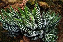 Succulents I have