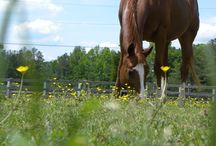 Equine Assisted Psychotherapy / Everything Horse and Healing