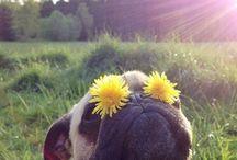 perros y flores
