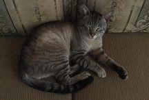 Bigos y güero / Gatitos