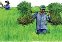 Agroecologia - agrosistemi